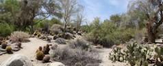 The California Desert